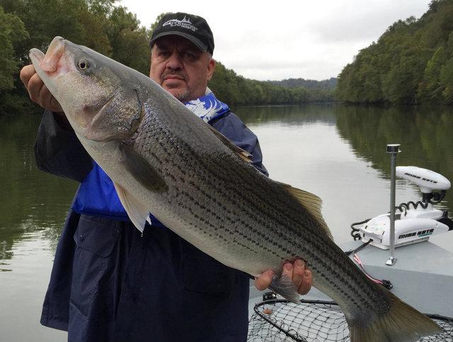 Captain jim 39 s cumberland lake and river report for Lake cumberland fishing