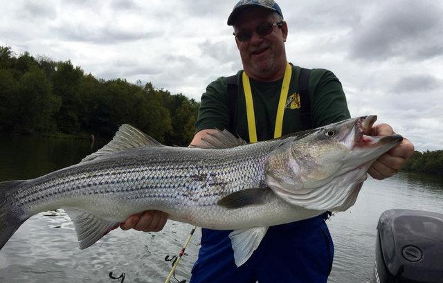 Mid october kentucky lakes and streams fishing report for Kentucky lake fishing reports