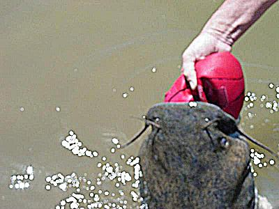 The catfish story you gotta see this one for Millwood lake fishing report