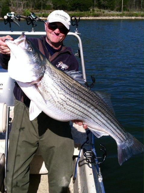 Captain jim 39 s lake cumberland striper fishing for Lake cumberland fishing