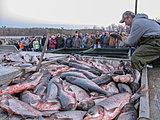 Click image for larger version.  Name:Asian carp tourney.jpg Views:162 Size:83.7 KB ID:15192