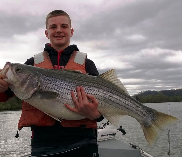 Cumberland river striper fishing report for Tennessee fishing report