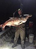 Click image for larger version.  Name:Bighead carp.jpg Views:163 Size:44.7 KB ID:16527