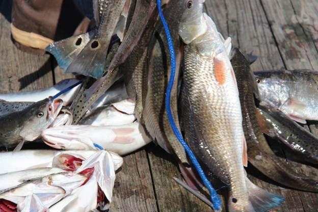 Fishin com - Savannah Fishing Report - GA