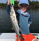 Click image for larger version.  Name:March 2020 Luca Snook.jpg Views:26 Size:133.0 KB ID:19806