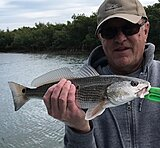 Click image for larger version.  Name:May 2020 Al Redfish.jpg Views:32 Size:115.6 KB ID:19930